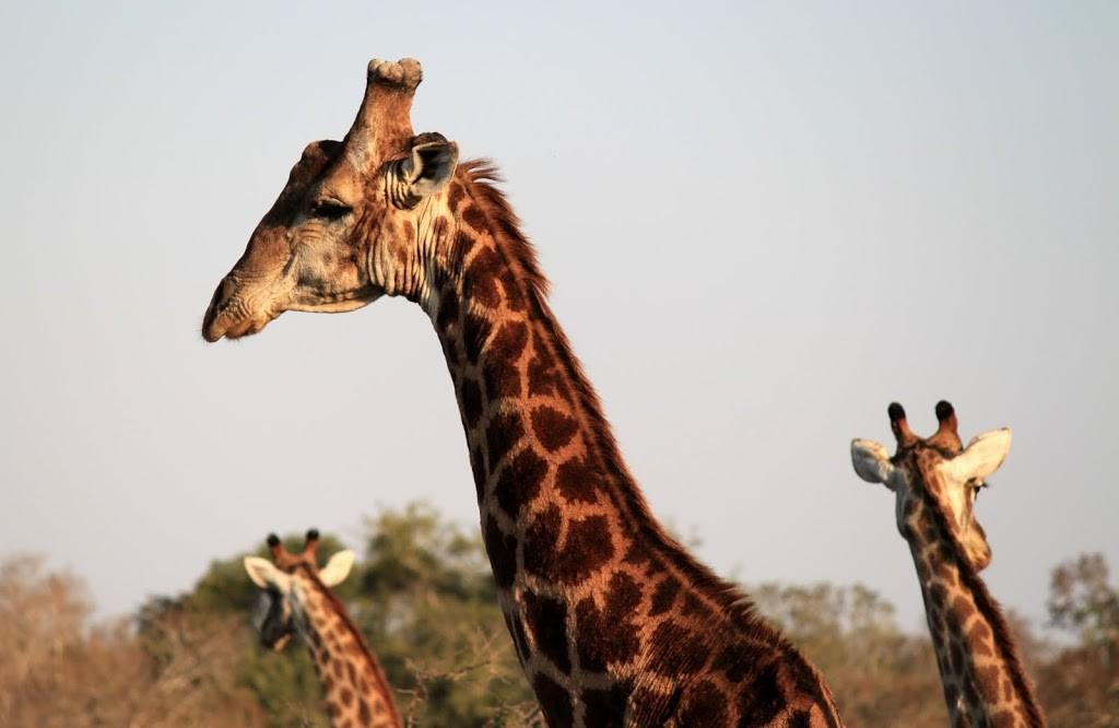 animals-of-Mkuzi-005