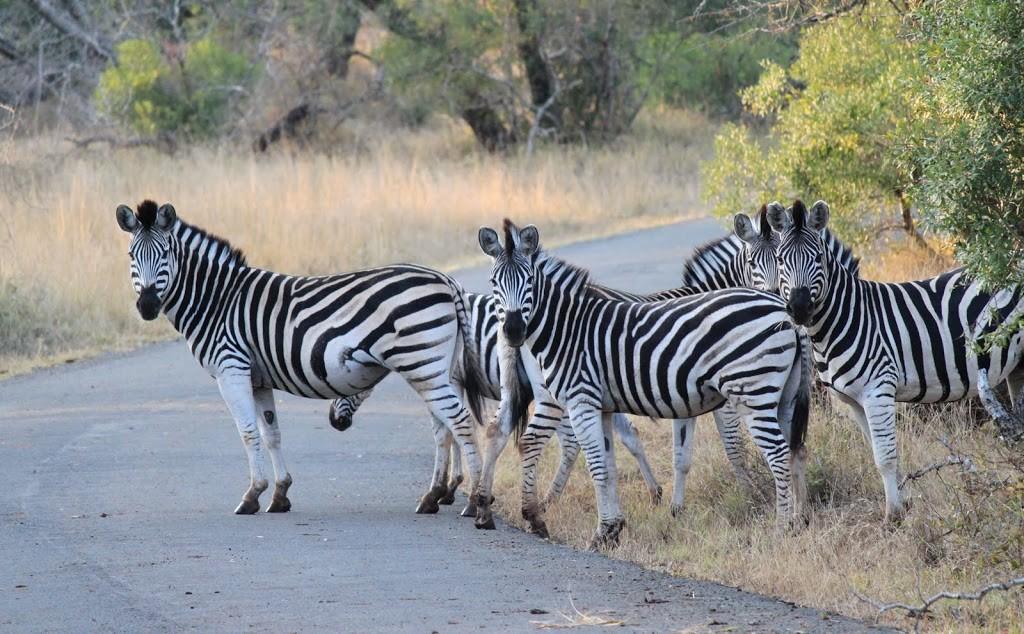 animals-of-Mkuzi-047