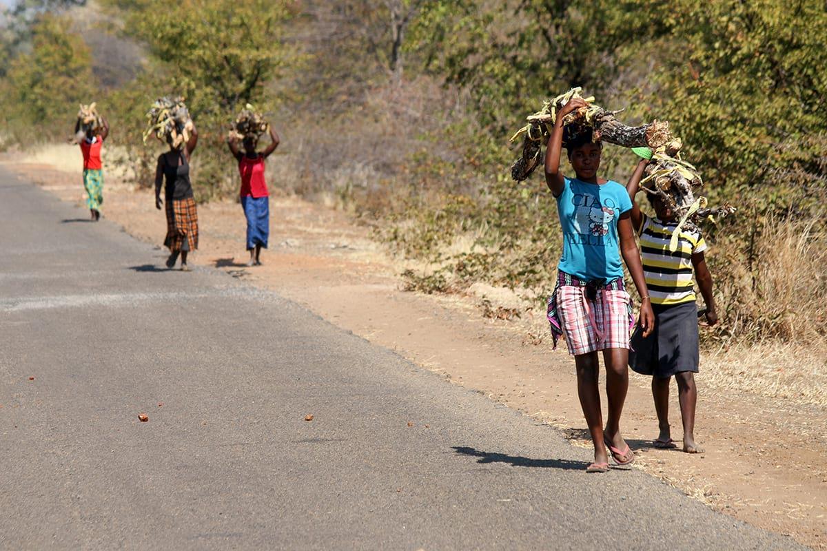 from-zimbabwe-to-rep-kenya-safaris