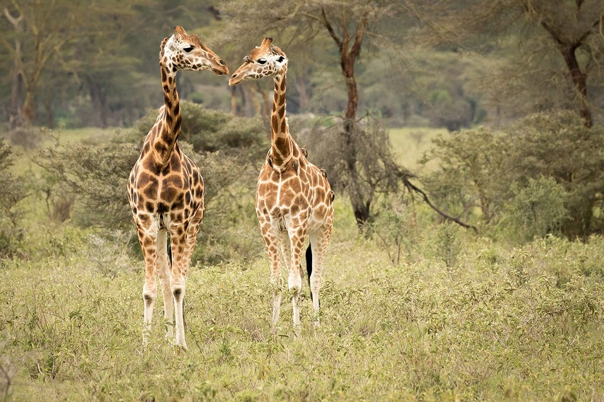10-day-kenya-safaris-package