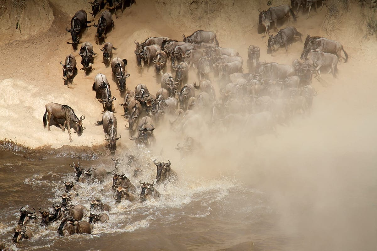 21-day-safari-package-rep-kenya-safaris