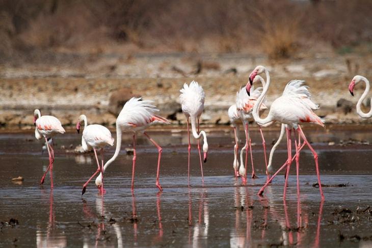 elementaita-lake-bogoria-rep-kenya-safaris