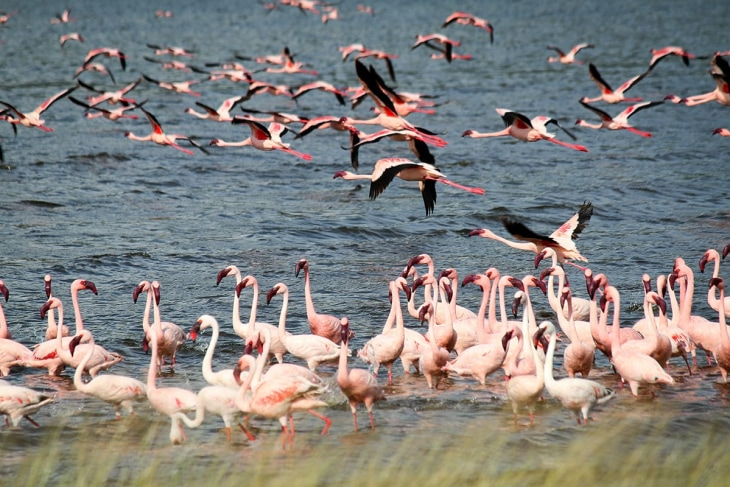 elementaita-lake-bogoria-rep-kenya-safaris