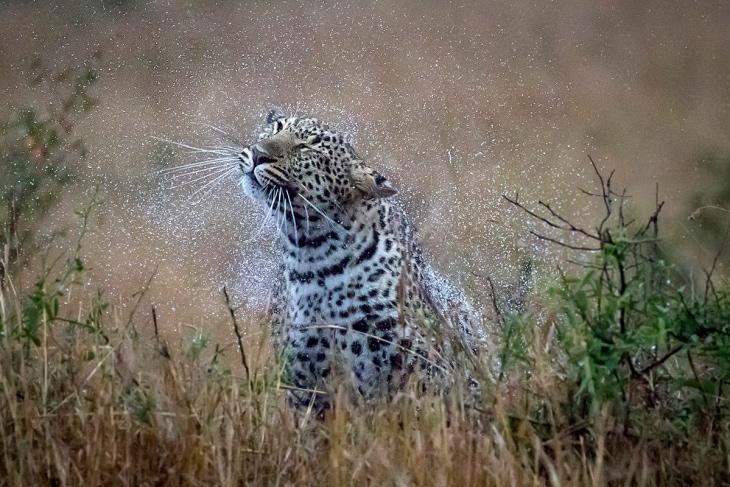 elementaita-maasai-mara-rep-kenya-safaris-21-days