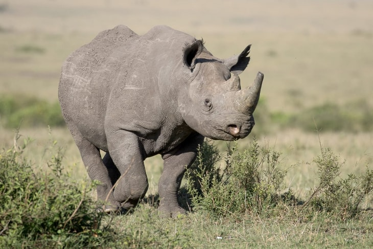 elementaita-rep-kenya-safaris-10-days