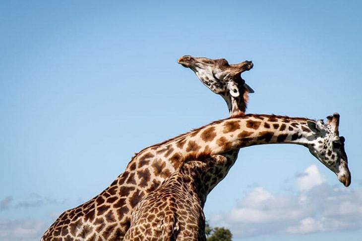 maasai-mara-day-4-5-6-rep-kenya-safaris