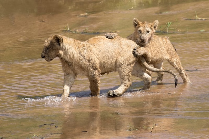 maasai-mara-nairobi-day-3-rep-kenya-safaris