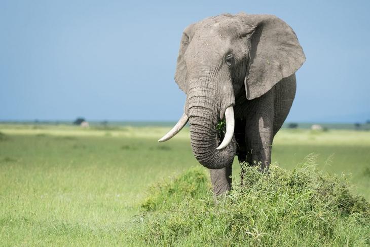 maasai-mara-nairobi-rep-kenya-safaris-10-days