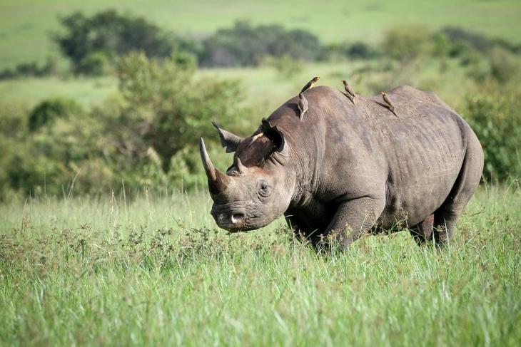 maasai-mara-nairobi-rep-kenya-safaris-21-days