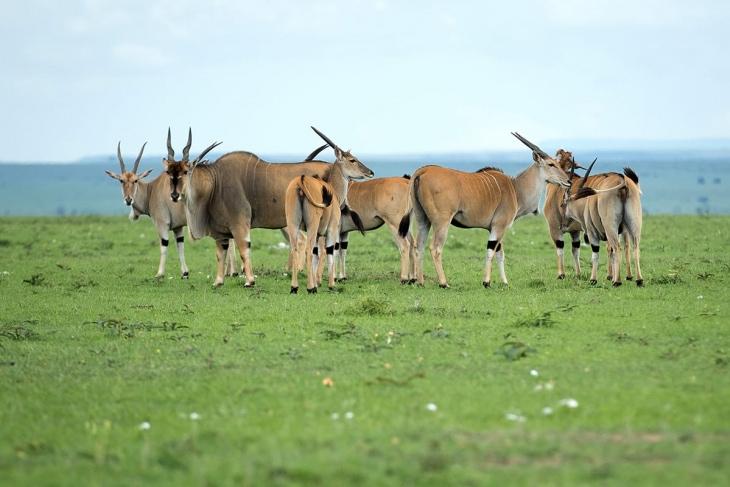 maasai-mara-rep-kenya-safaris-10-days