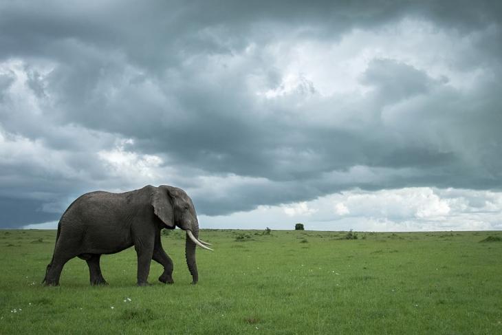 maasai-mara-rep-kenya-safaris-21-days