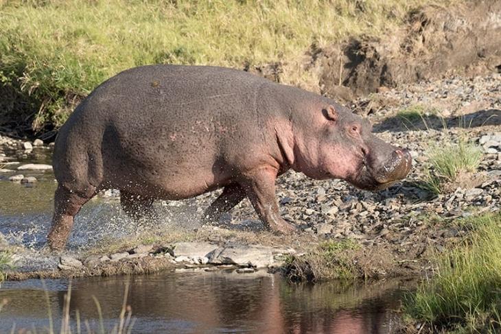 masaai-mara-reserve-day-2-rep-kenya-safaris
