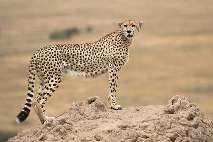 nairobi-maasai-mara-day-1-rep-kenya-safaris