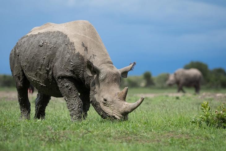nairobi-ol-pejeta-rep-kenya-safaris