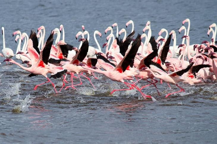 naivasha-lake-bogoria-rep-kenya-safaris