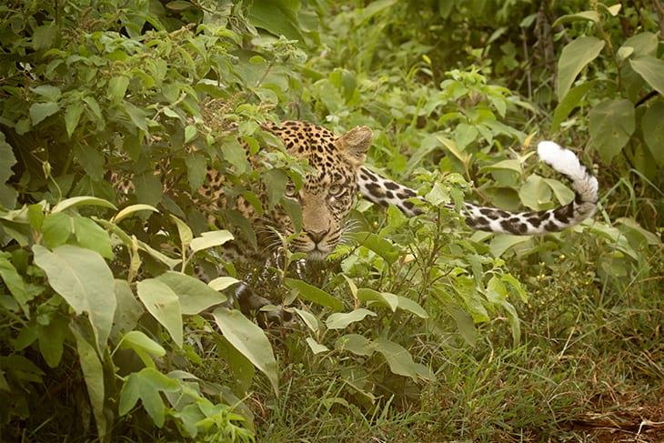 ol-pejeta-aberdares-rep-kenya-safaris