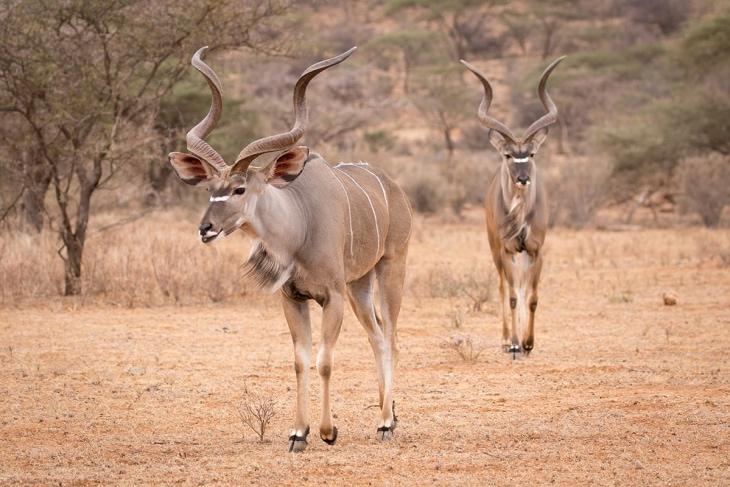 ol-pejeta-samburu-rep-kenya-safaris