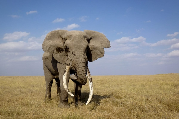 tsavo-west-amboseli-rep-kenya-safaris
