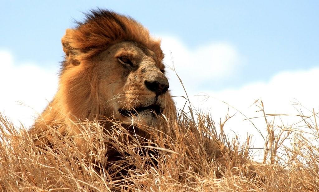 serengeti-002