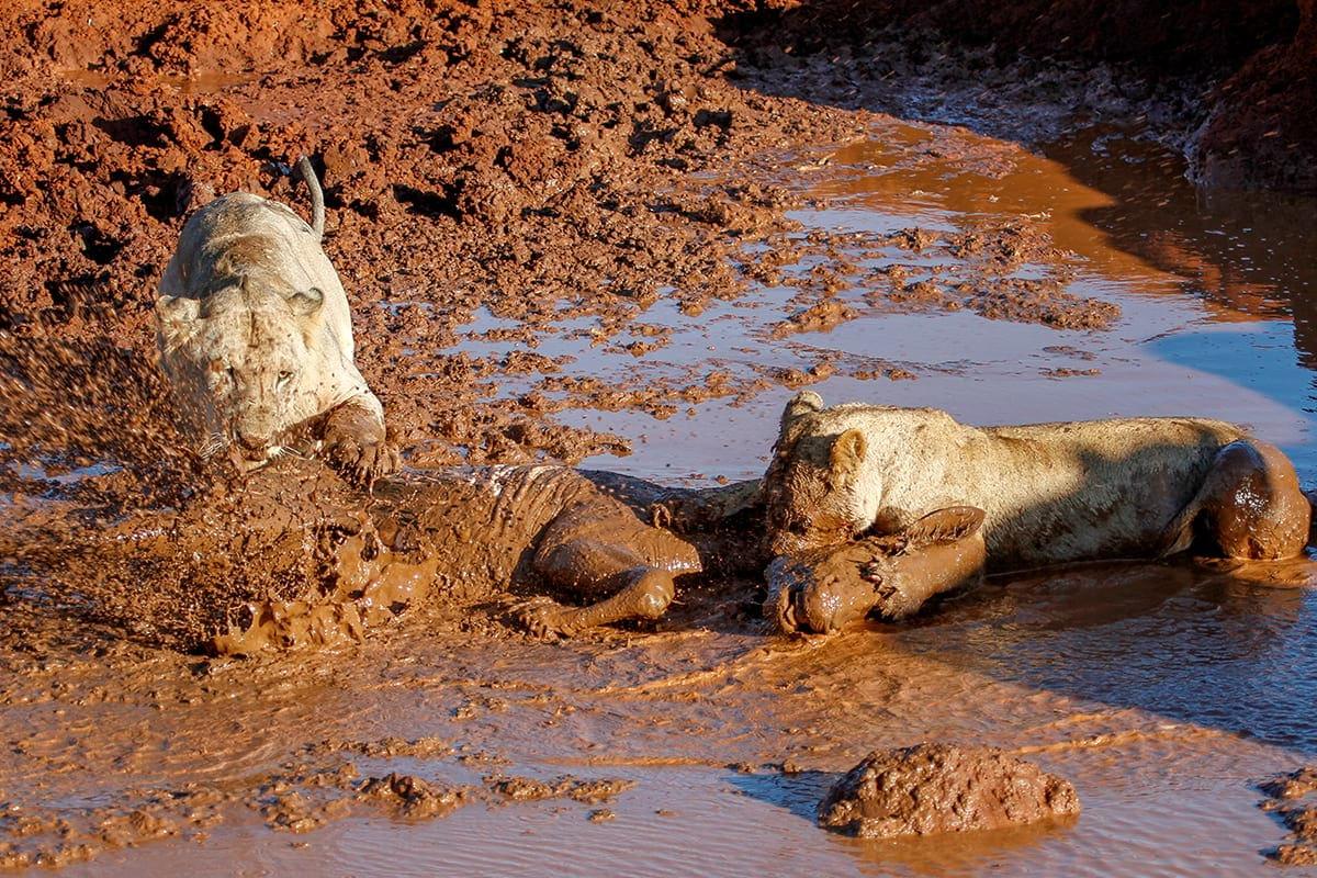 takedown-in-tsavo-rep-kenya-safaris