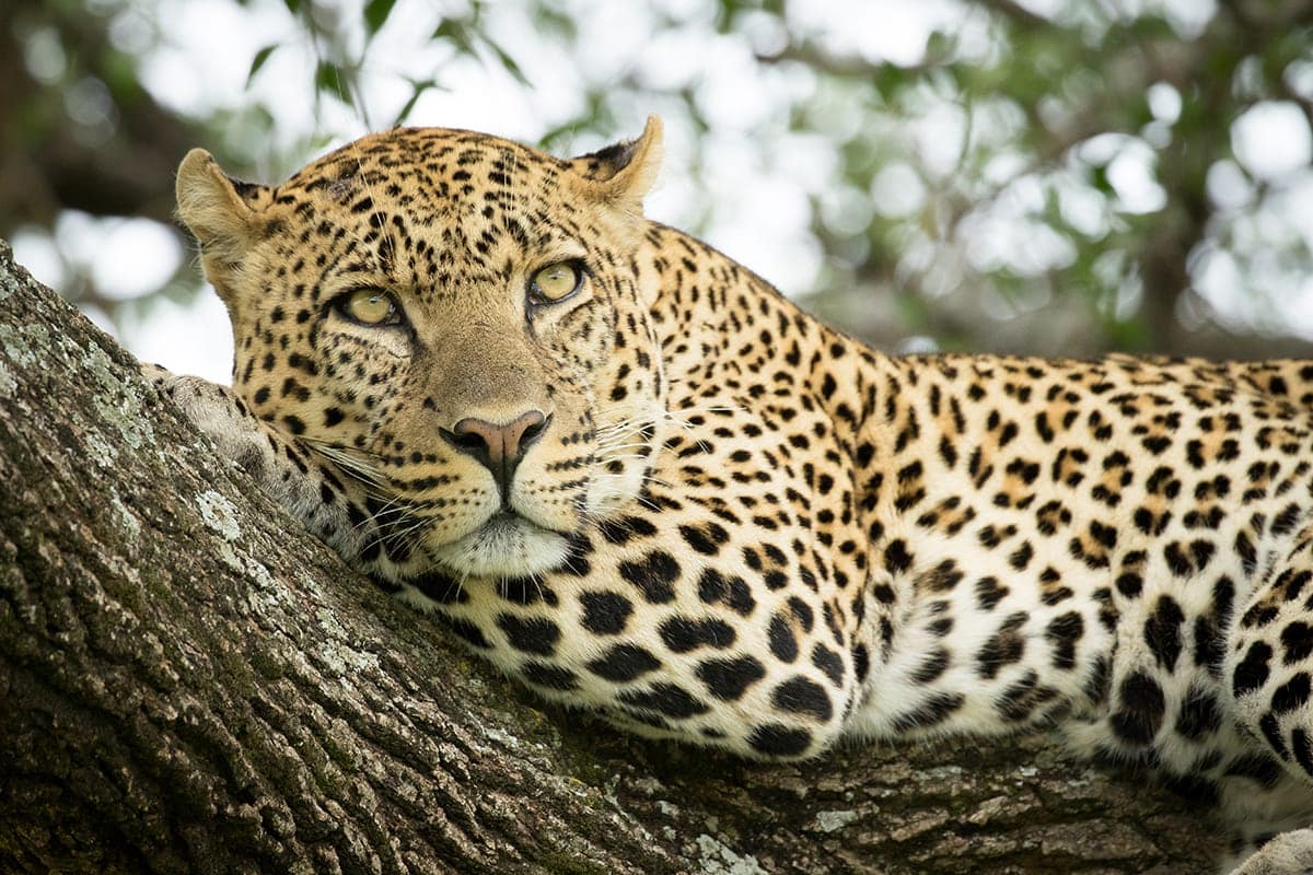 7-day-kenya-safaris-package