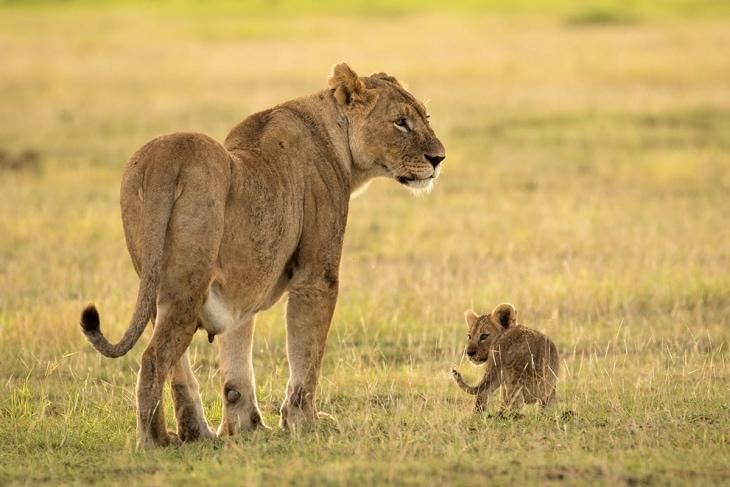 amboseli-rep-kenya-safaris