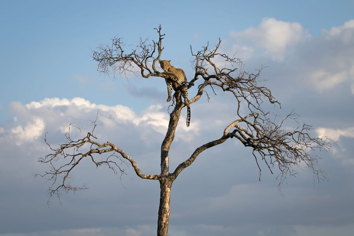 elementaita-maasai-mara-rep-kenya-safaris