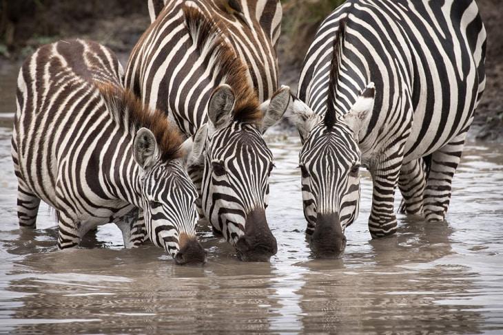 maasai-mara-rep-kenya-safaris