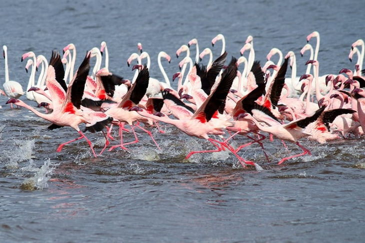 naivasha-lake-bogoria-rep-kenya-safaris
