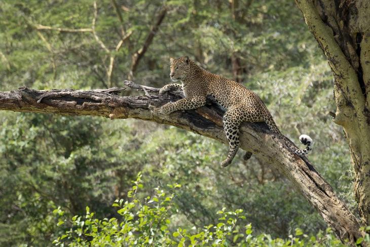 nakuru-rep-kenya-safaris-21-days