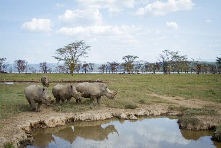 nakuru-waterhole-day-2-rep-kenya-safaris