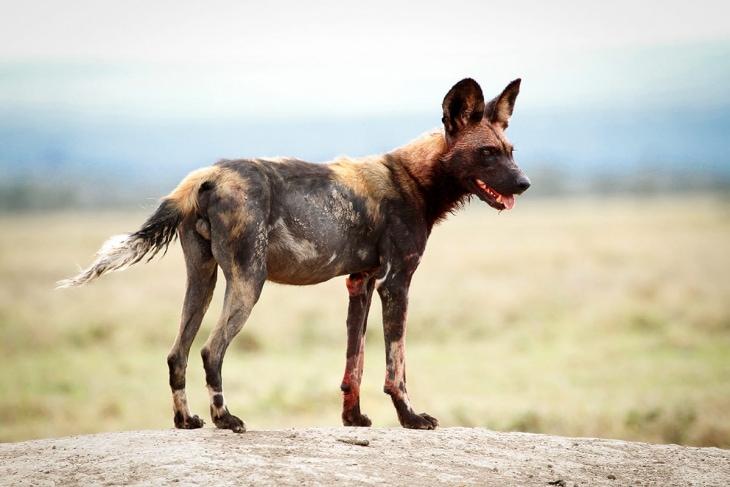 ol-pejeta-rep-kenya-safaris