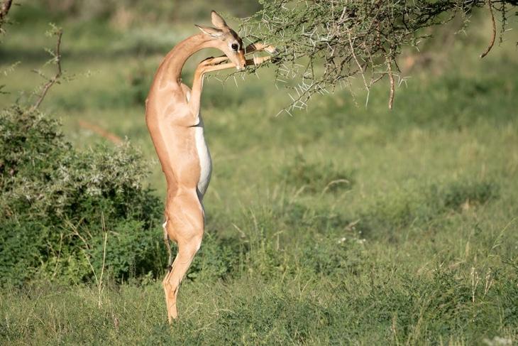 samburu-rep-kenya-safaris