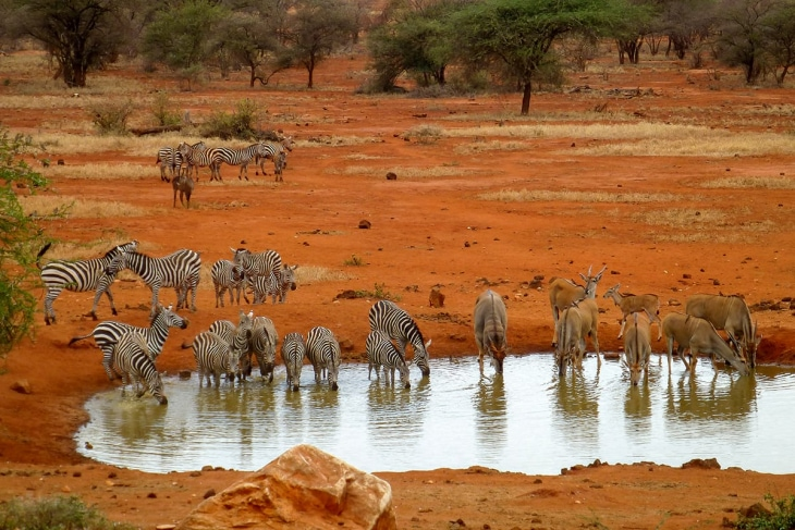tsavo-east-tsavo-west-zebras-rep-kenya-safaris